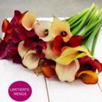 Callas Blumen