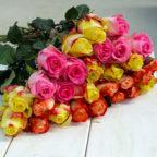 Rosen in Überraschungsfarben