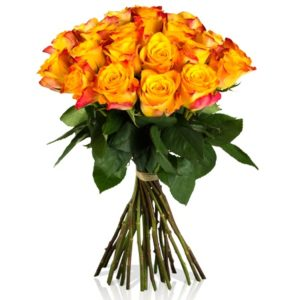 Orangene Rosen BB