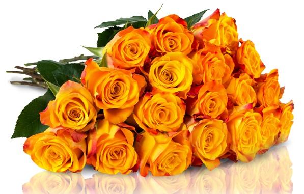 Orangene Rosen IBB