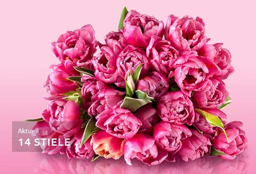 pinken-Tulpen