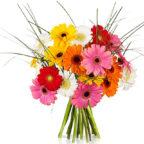 Germini-Blumen