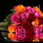 06-0246-sophia-gelbe-rote-pinke-bunte-rosen-rosenrallye-liegend-pb2_2_1