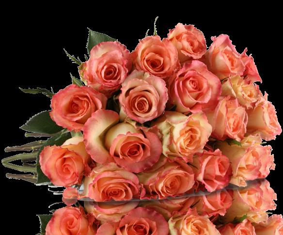 20 rosa graceful rosen gratis gru karte f r 18 90. Black Bedroom Furniture Sets. Home Design Ideas