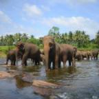 indien-elefanten
