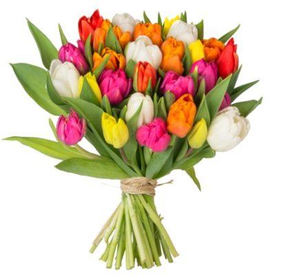 bunte-tulpen