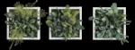 Green Friday bei styleGREEN: Pflanzenbilder mit 20%