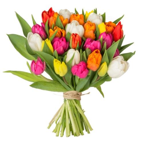 Blumeideal 35 Bunte Tulpen Für 1898 Inkl Versand