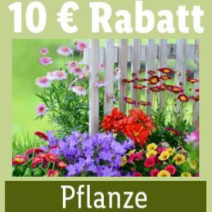 Lidl_Pflanzen_Rabatt
