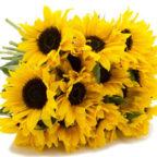 Sonnenblumen_Strauss