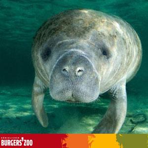 Seekuh-Burges Zoo