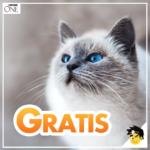 🐱 GRATIS Katzenfutter (800g): Purina ONE 3-Wochen-Testaktion + Überraschungspaket