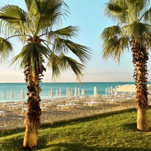 Palmen-Bulgarien