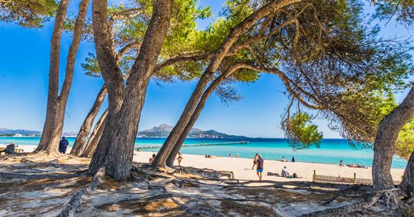 Mallorca 7 Tage In Alcudia Mit All Inclusive Flug Transfer Ab