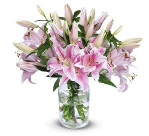 pinke lilien