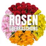 Rosenueberraschung