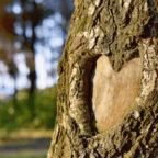 Baum-mit-Herz