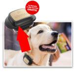 GPS Hunde-Tracker: Kippy V-Pet für 9,99€ + 12 Monate gratis Service (Vodafone)