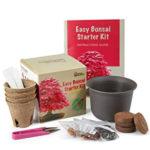Bonsai-Starter-Kit