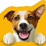 Amazon Haustier Aktion: Nimm 5, zahl 4 - z.B. 240x 100g Kitekat Nassfutter für 31,15€ (statt 53€)