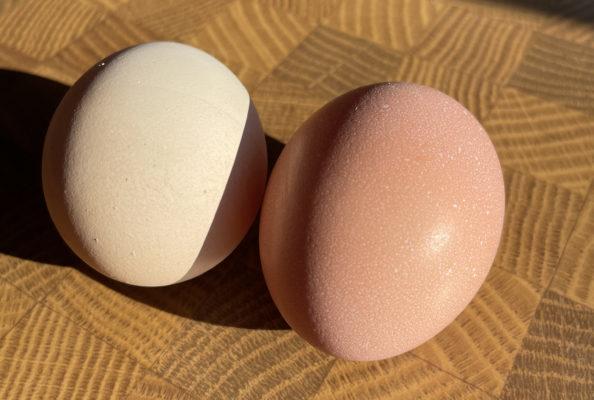 Hier gleicht kein Ei dem anderen