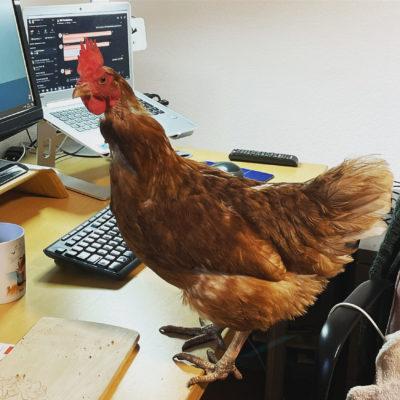 Elfriede hilft bei der Arbeit im Homeoffice