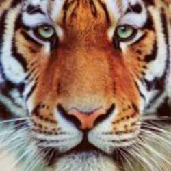 Profilbild von NetFire