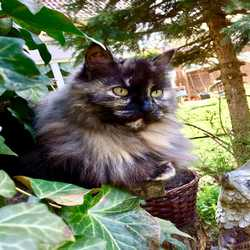 Profilbild von Silke