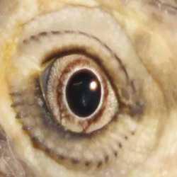 Profilbild von Bartis