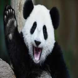 Profilbild von Panda123