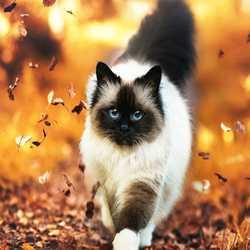 Profilbild von Lilu