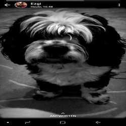 Profilbild von baerenkurde