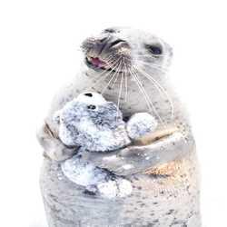 Profilbild von Snuggles