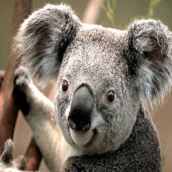 Profilbild von Lucky17