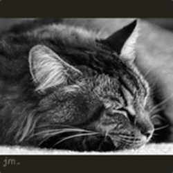 Profilbild von Sonnenschein454