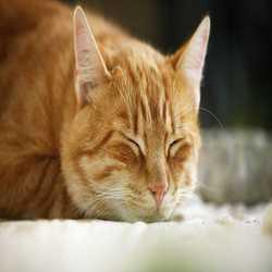 Profilbild von Fluffi