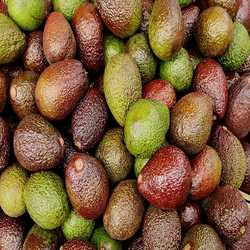 Profilbild von avocado