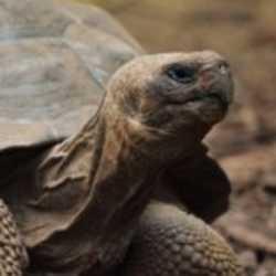 Profilbild von tartaruga