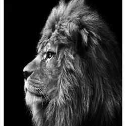 Profilbild von riboy