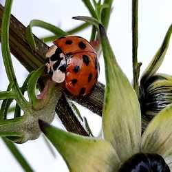 Profilbild von seedrachen