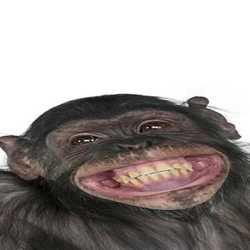 Profilbild von Paule