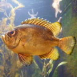 Profilbild von flyingitchi