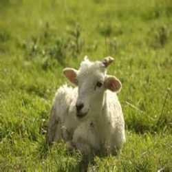 Profilbild von ZiegevonNebenan