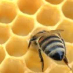 Profilbild von Honigmade