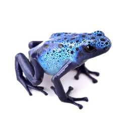 Profilbild von frosch