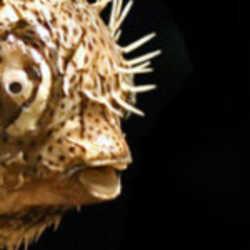 Profilbild von amefa