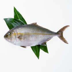 Profilbild von Gadt