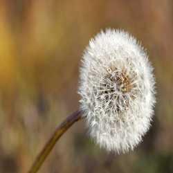 Profilbild von Bibschi