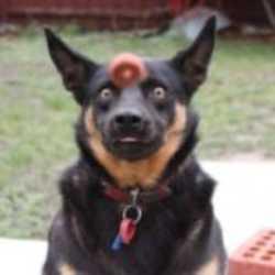 Profilbild von dmbutter