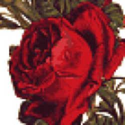 Profilbild von Shehrezad